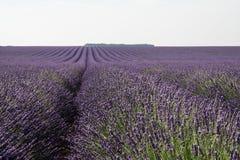 Зацветенное поле лаванды в Провансали Франции Стоковое Фото