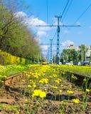 Зацветенные рельсы Стоковая Фотография