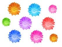 зацветите весна Стоковое Фото