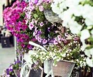 Зацветите в корзине винтажного велосипеда на винтажной деревянной стене дома Стоковые Изображения