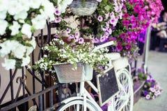 Зацветите в корзине винтажного велосипеда на винтажной деревянной стене дома, кафе улицы лета Стоковое Фото
