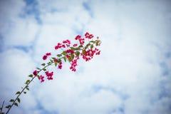 Зацветите в острове Gulangyu Xiamen Китая Стоковая Фотография