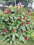 Зацветите в Park City Cali, Колумбия Стоковые Изображения
