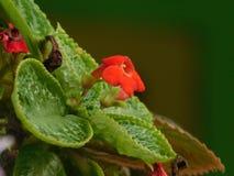 зацветите красный цвет стоковая фотография rf