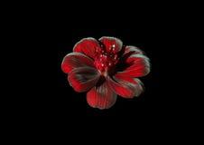 зацветите красный цвет стоковое изображение