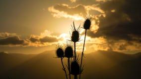Зацветите крупный план во время захода солнца в Meteora, Греции Стоковая Фотография RF
