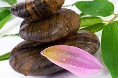 Зацветите лепесток с камнями Дзэн и листьями бамбука Стоковое фото RF