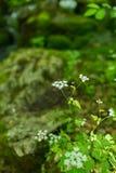 Зацветите на предпосылке зеленого мха с селективным фокусом Утихомиривать естественные обои изображения экологичности принципиаль стоковые изображения