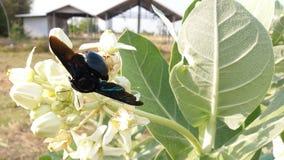 Зацветите нектар, насекомые путь вперед стоковое фото rf
