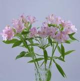 зацветите пинк лилии Стоковые Изображения RF