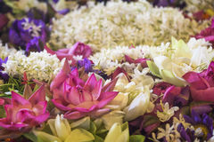 Зацветите поддача в виске зуба, Канди, Шри-Ланка Стоковые Изображения