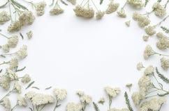 Зацветите рамка цветков поля на белой предпосылке Плоское положение, взгляд сверху флористический шаблон литерности модель-макета Стоковые Фото