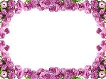 зацветите рамка Стоковые Фотографии RF