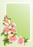 зацветите рамка Стоковые Изображения