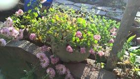 зацветите розовый бак Стоковое Изображение