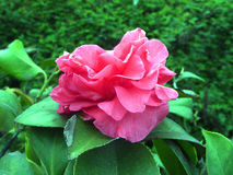 зацветите свежая Стоковые Фото