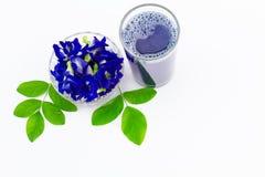 Зацветите сок гороха бабочки в стекле с свежими цветками и листьями зеленого цвета на белой предпосылке Стоковая Фотография RF