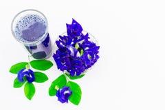 Зацветите сок гороха бабочки в стекле с свежими цветками и листьями зеленого цвета на белой предпосылке Стоковое Фото