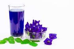 Зацветите сок гороха бабочки в стекле с свежими цветками и листьями зеленого цвета на белой предпосылке Стоковые Фото