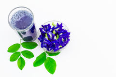 Зацветите сок гороха бабочки в стекле с свежими цветками и листьями зеленого цвета на белой предпосылке Стоковые Изображения
