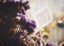 Зацветите сухое sp Limonium мор-лаванды, statice, caspia или болот-Розмари В кафе Брайн и фиолетовый цветок стоковые изображения