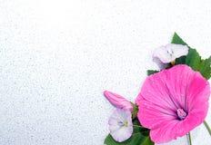 Зацветите, украсьте дырочками, природа, красный цвет, цветки, завод, поднял, садовничайте, цветение, весна, зеленый цвет, флорист Стоковые Изображения RF