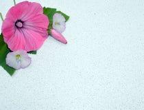 Зацветите, украсьте дырочками, природа, красный цвет, цветки, завод, поднял, садовничайте, цветение, весна, зеленый цвет, флорист Стоковое фото RF