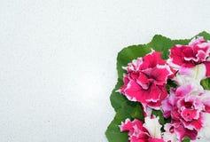 Зацветите, украсьте дырочками, природа, красный цвет, цветки, завод, поднял, садовничайте, цветение, весна, зеленый цвет, флорист Стоковые Фото