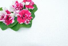 Зацветите, украсьте дырочками, природа, красный цвет, цветки, завод, поднял, садовничайте, цветение, весна, зеленый цвет, флорист Стоковые Фотографии RF