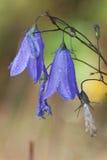 Зацветите belltower стоковое фото rf