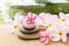 Зацветите plumeria или помадка frangipani украшенные на утесе камешка внутри Стоковые Изображения