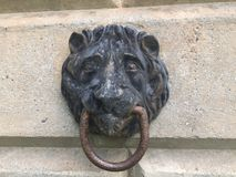 Зачаливание 2 льва головное Стоковое Изображение