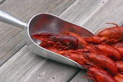 зачерпнутые crawfish Стоковое фото RF