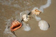 зашкурите воду раковин моря Стоковые Изображения RF
