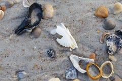 зашкурите seashells Стоковые Изображения