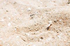 Зашкурьте конец-вверх, текстуру песка, пустой пляж, солнечный день, Стоковые Изображения RF