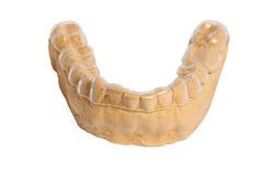 Заштукатурьте модель челюсти с пластичной плитой Стоковое фото RF
