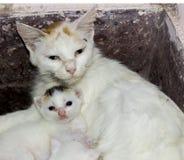 Мать с ее младенцем стоковое фото rf