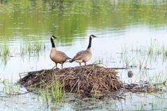 защищать гнездй стоковые изображения rf