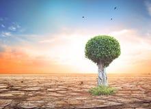 Защищать концепцию леса: Изолированное дерево на белой предпосылке стоковое фото