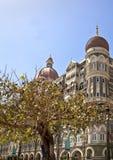 Защищенное дерево голубя на Taj Стоковые Изображения RF