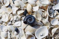Задавленные раковины моря разбросанные на землю Стоковые Фотографии RF