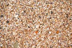 Задавленные cockleshells на конце-вверх пляжа Стоковое Фото