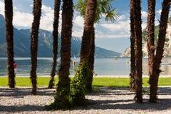 за взглядом пальм озера Стоковая Фотография RF