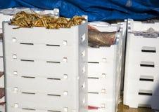 Задвижка свежих рыб в белых пластичных коробках Стоковые Изображения