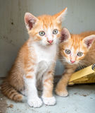 Задворк 2 милая котят дома Стоковые Фото