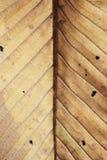 За высушенной предпосылкой текстуры лист Стоковое Фото