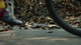 Задействовать на дороге через осень видеоматериал