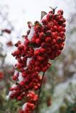 Задержанные плодоовощи Стоковое Фото