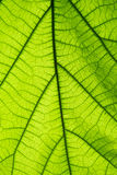 За зеленой поверхностью лист Стоковое Фото